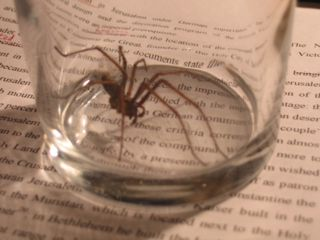 Spider forced to live in glass jar